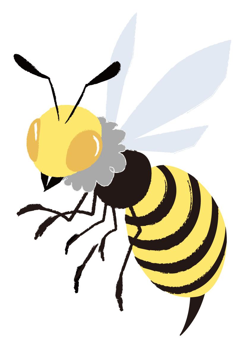 アシナガバチの画像 p1_12
