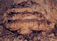 ○オオスズメバチ 巣