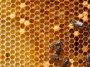 ミツバチ 蜜蝋